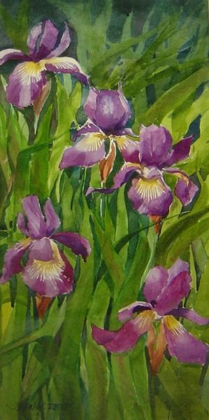 deen's iris